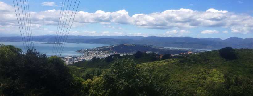 The golden triangle of Transient, Highbury Fling and Clinical Summary Polhill Reserve is based in Wellington's Aro Valley
